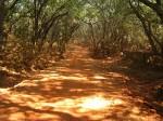 The Burning Road- Matheran